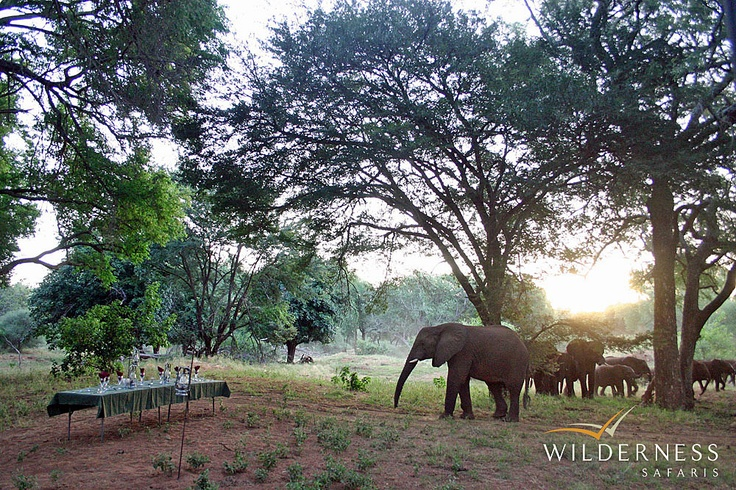 Pafuri Walking Trail -The Pafuri region is famous for the large herds of elephant and buffalo that are resident most of the year round. They concentrate in particular around the permanent waters of the Luvuvhu River in the dry winter months. #Safari #Africa #SouthAfrica #WildernessSafaris