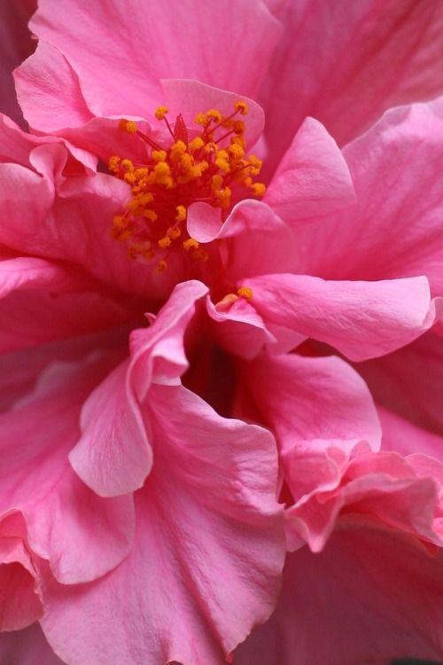 Common Garden Flowers Pink 822 best ♔ garden flowers ♔ images on pinterest | flowers