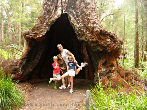 The Ancient Empire Walk - on the ground at The Valley of the Giants in Walpole WA.  If you don't like the heights of the Tree Top Walk - this is a great option.
