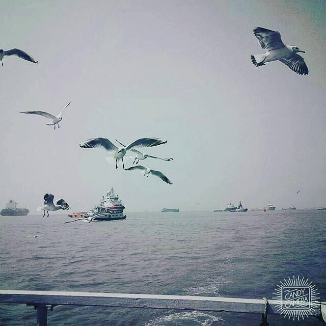 On The Way To THe Elephanta Island Caves Mumbai!  _____________________ From the months of November to January one can see huge number of seagulls over the sea of Mumbai. Riding through the Arabian Sea tourists witnesses many gigantic boats & seagulls catching fishes. This makes an amazing start to your journey towards Elephanta Caves! _____________________ Amazing picture clicked by @niharika_singla _____________________ Caught in this pic so beautifully  #elephantacaves #sea #beautiful…