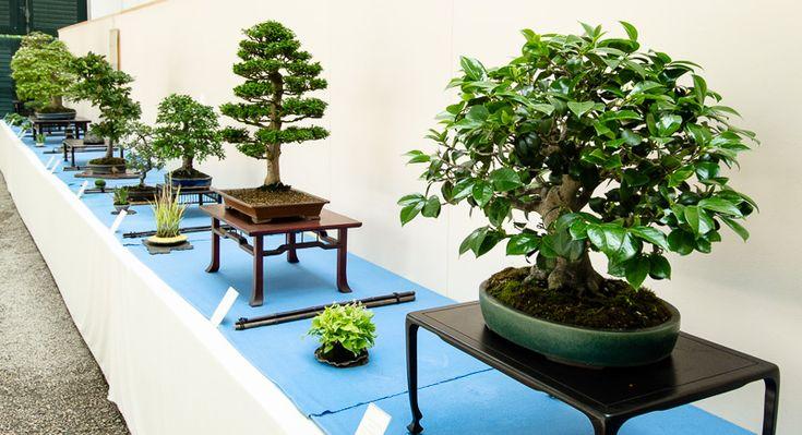 Bonsai-Ausstellung im botanischen Garten München