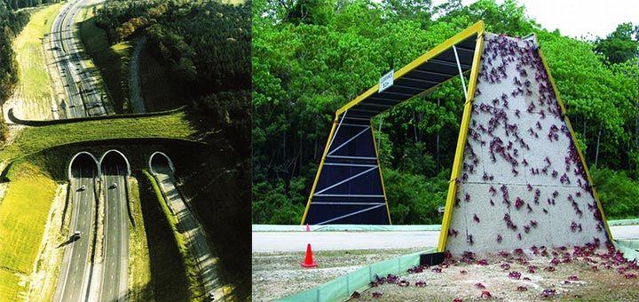 Мосты для миграции животных - вот забота о будущем! - http://pixel.in.ua/archives/26381