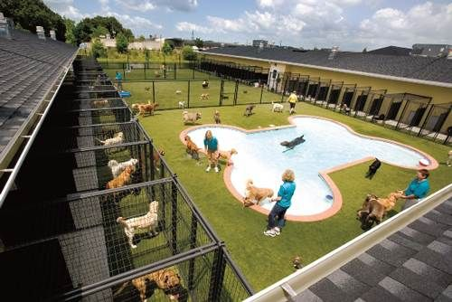 65 Best Images About Boarding Kennels On Pinterest Metal Barn Dog Boarding Kennels And Cat Kennel