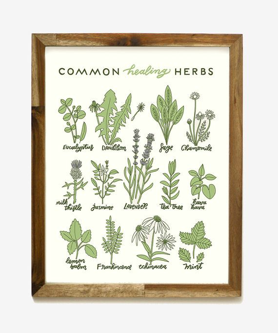 Hand illustrations and lettering of common herbs typically used for healing  Details: Screen printed with water based inks on professional equipment Size: 11 x 14 inches (easy to frame!) Paper: 100# recycled off-white green tinted card stock Inks: Dark green, light green, lavender  Our high-quality screen printing inks are bold, opaque and wont fade over time!  This print will ship safely rolled in kraft paper inside of an ultra-sturdy kraft mailing tube.  Frame not included.