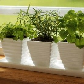 The Apartment-Dweller's Guide to Keeping an Herb Garden