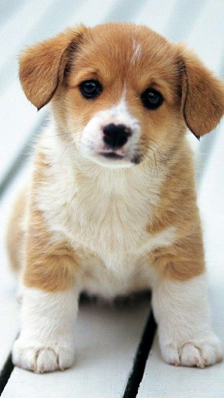iPhone X Wallpaper Puppy doggo Cute dogs, puppies