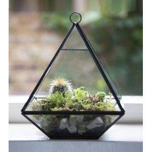 Terrarium pyramide 29,95 €