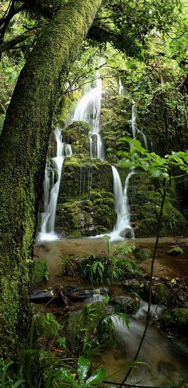 Okatina Beauty - Rotorua, Waikato, New Zealand http://malfroymotorlodge.co.nz family accommodation