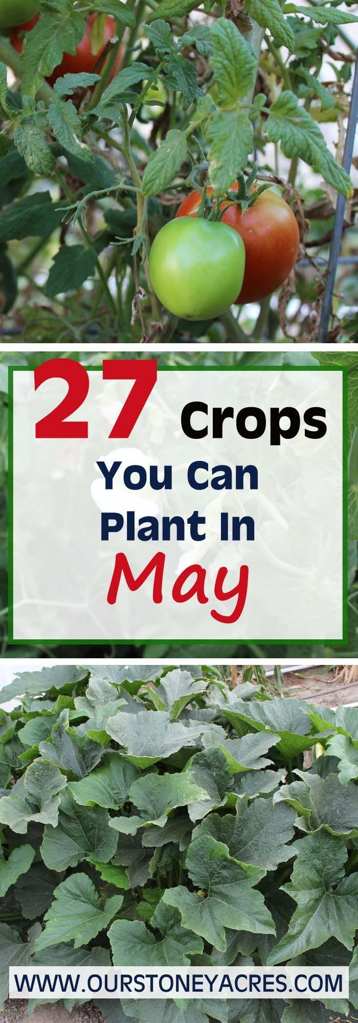693 best Gardening with Kids images on Pinterest | Gardening tips ...