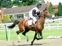 Cavaleiro num cavalo Puro Sangue Árabe