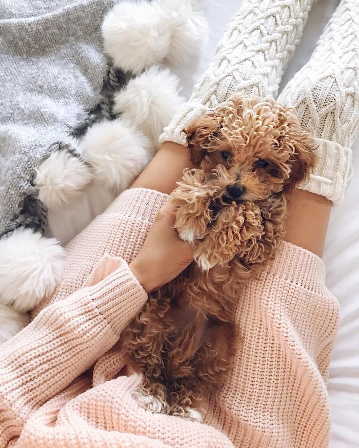 Ideal activity for a chilly winter day....snuggling a poodle puppy!