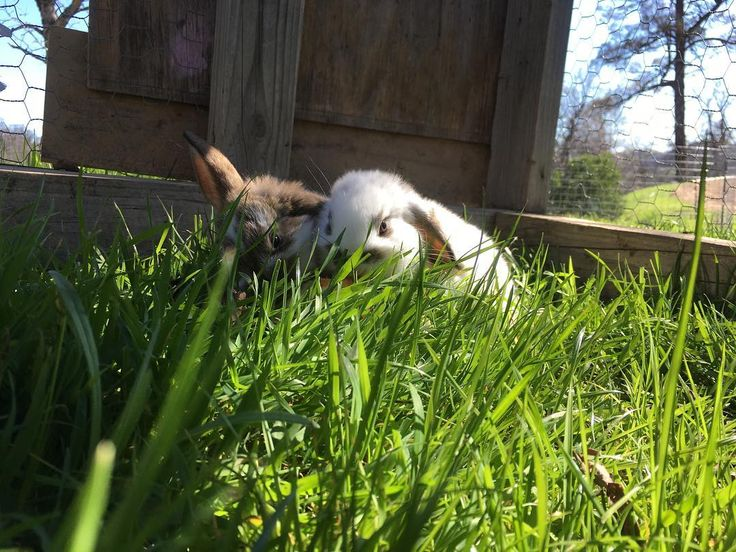 pastured buns. mini carbon sequestration devices. i adore them all the more for their fondness of grass. they slurp it down like spaghetti.