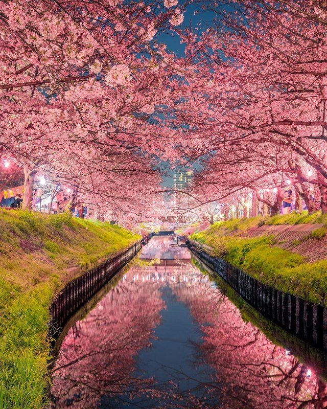 Cherry Blossoms In Chiba Prefecture Japan Mostbeautiful Japan Japan Travel Japan Spring