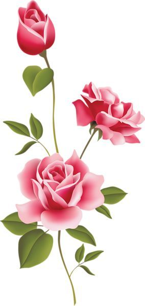 Pink Rose Art PNG Clipart: