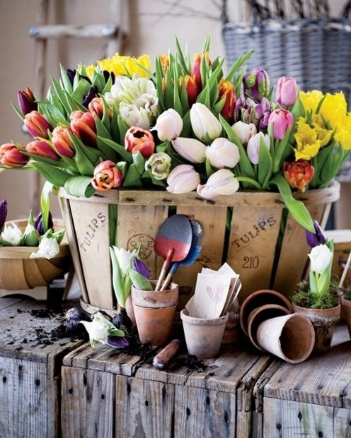 tulips: Spring Flowers, Easter, Tulip, Beautiful Flowers, Bulbs, Baskets, Wooden Crates, Front Porches, Clay Pots