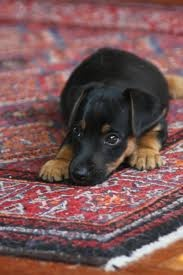 black and tan terrier....looks alot like our dog.  :)
