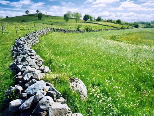 Le plateau de l'Aubrac