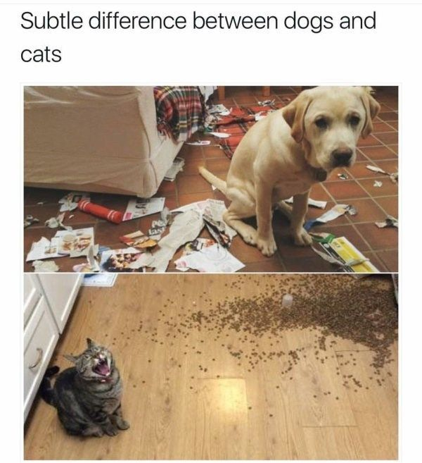 20 lustige Katzen-Meme, zum Ihres Caturday-Morgens zu verbessern – funny