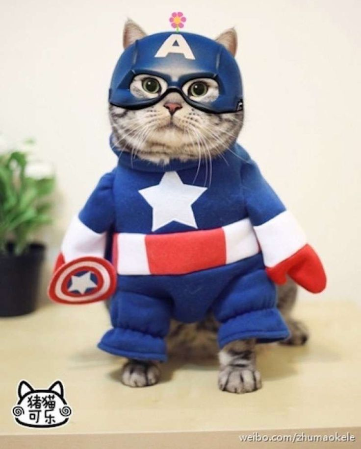 Image result for cat costumes