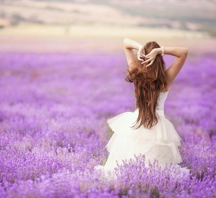 French lavender fields