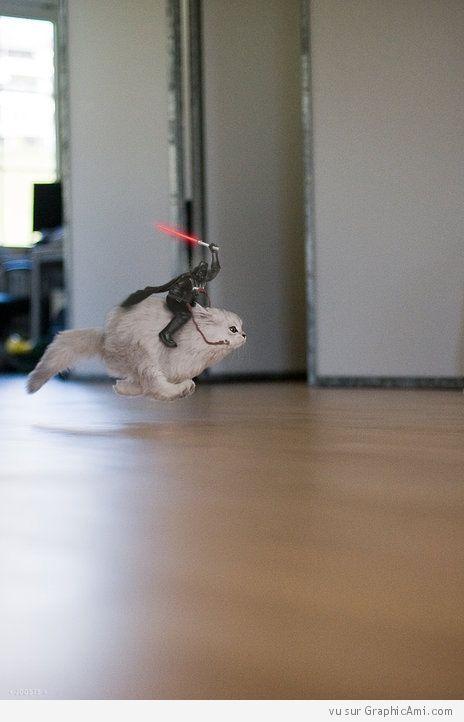 Dark Vador sur un chat.A l'attaque!