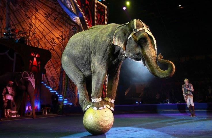circus animals animal ...