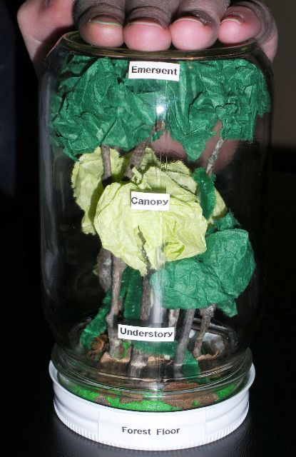Rain forest - Many ideas for a rainforest theme & projects.: Teaching Science, Rainforests Projects, Rainforests Classroom Themed, Rainforests Idea, Rainforests Crafts, Glasses Jars, Rainforests Themed, Rainforests Layered, Rainforests Teaching Idea