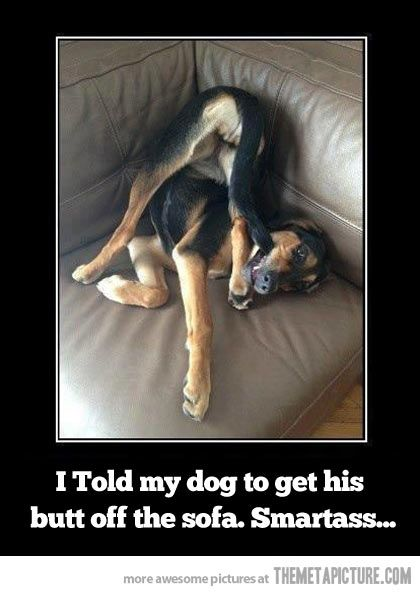 Smartass dog…lol