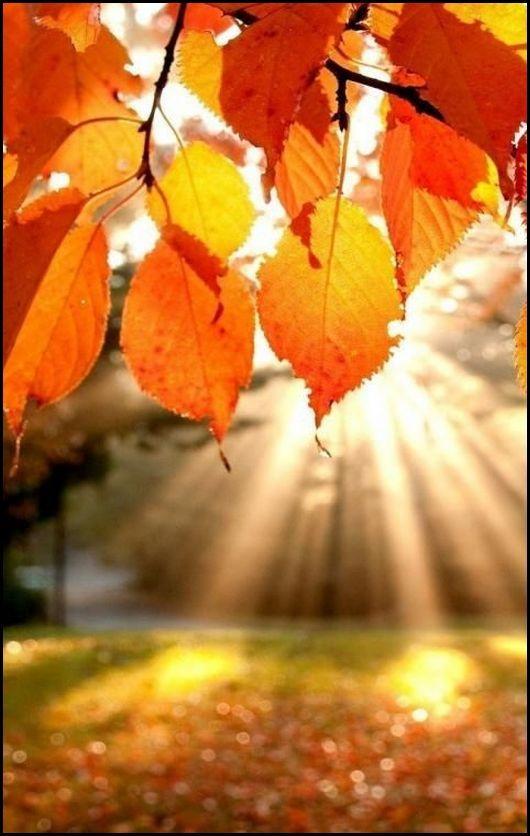 Hallo Herbst! So lieben wir dich. #Lieblingstasche