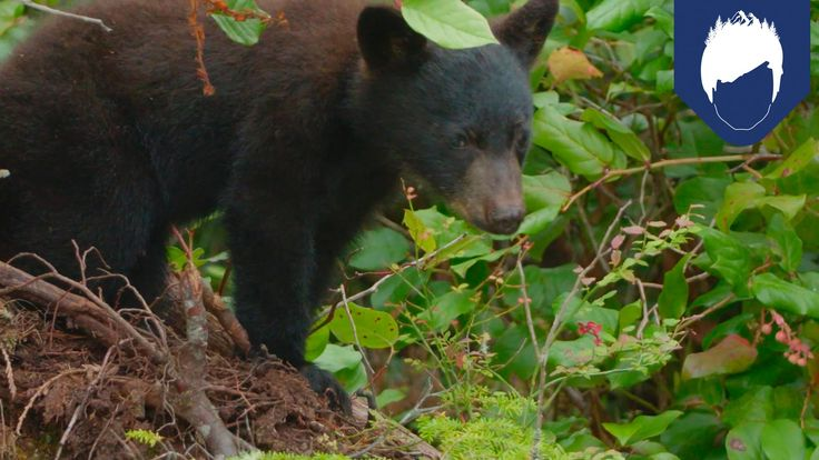 Black Bears Are Better Tree Climbers Than You—Here's Why