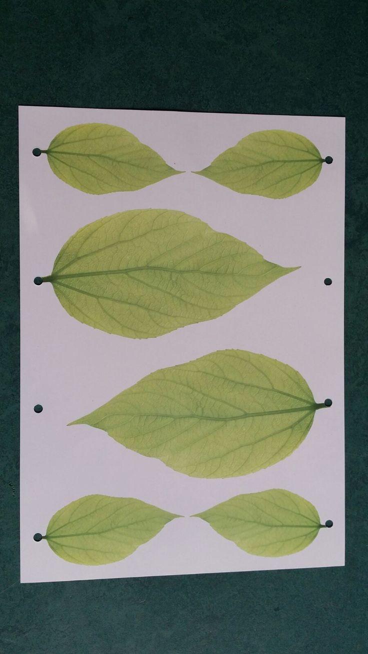 Wil jij je dierbare op een speciale manier gedenken? Hang een blaadje met een zelfgeschreven tekst aan een herinneringsboom. Ontwikkeld door uitgeverij dubbelzes.nl