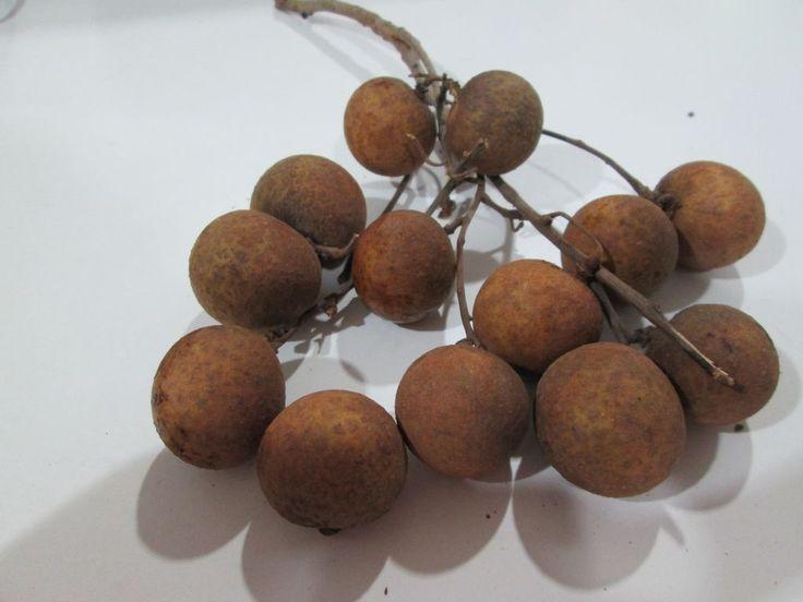 Lam Yai o Longan , una bacca che piu' brutta non si puo' - http://www.provarciegratis.com/cucina-thailandese/frutti-vegetali-tropicali/lam-yai/ - by  Pier Sottojox -  #fruttathai #fruttatropicale #lamyai #longan Leggi qui tutto l'articolo http://www.provarciegratis.com/cucina-thailandese/frutti-vegetali-tropicali/lam-yai/