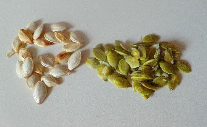 Voici comment récupérer les graines de vos courges et autres potirons.