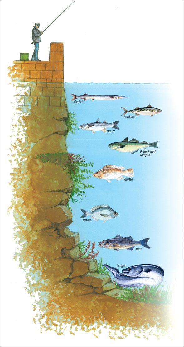 にげぷ바다이야기시즌づつぁあゴネ▶▶ GG35。SCAY。NET ◀◀キャオ손오공게임てクで◀◀릴게임신천지사이트 씨엔조이게임사이트 오션파라다이스사이트 오션게임pc황금성게임인터넷릴게임 게임황금성 황금성게임예시황금성인터넷손오공게임 The best way to fish a sea wall or pier