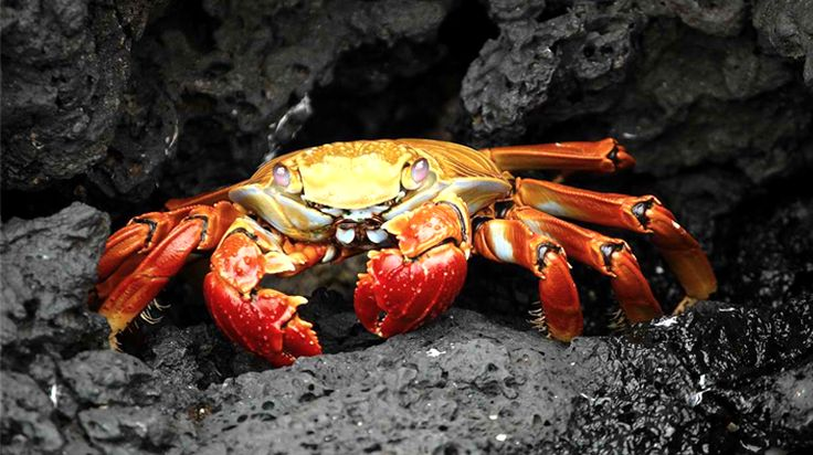 10 Signs that a Person has a Crab Mentality-- common bad habits of many Filipinos. >:(