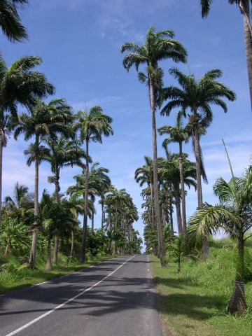 Allee Dumanoir, Guadeloupe