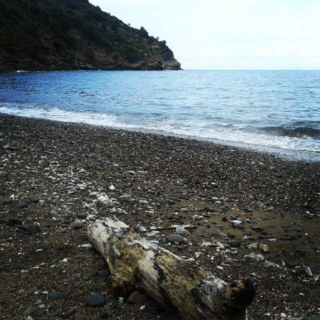 #ShareIG Doni del mare #Ortano #RioMarina #isoladelba #ILoveElba #tuscany #tuscanygram #sea #beach
