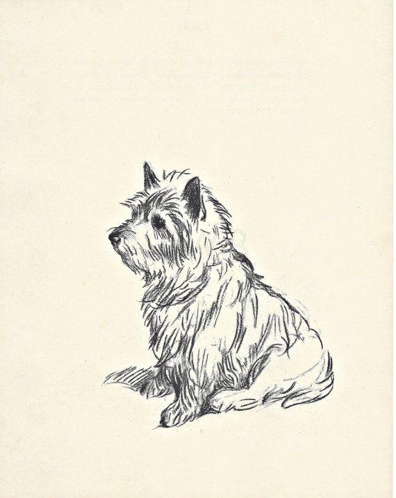 WESTIE - 1930s Vintage Dog Print, Animal PRint, Art Illustration to Frame, Lucy Dawson, Wall Art, Home Decor, black & white, terrier