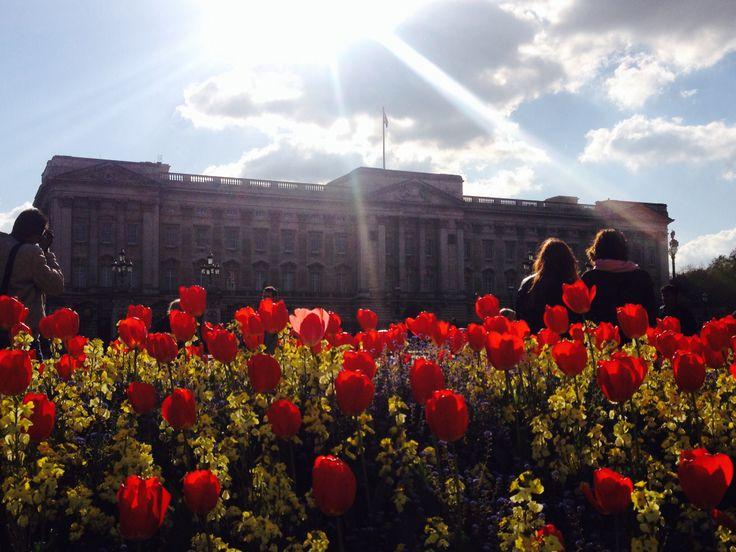 Buckingham Palace Tulips