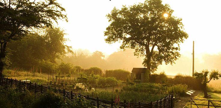 dusk vegetable garden woven fence