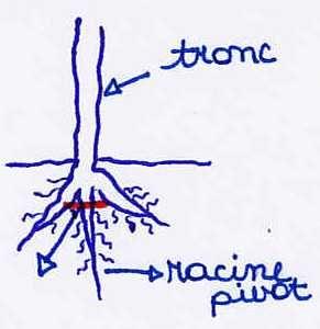 Explications pour créer un bonsaï : racines, tronc, feuillage