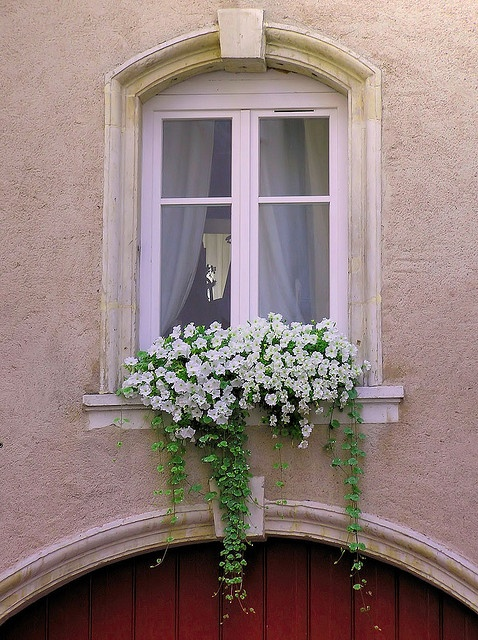 simple whites and trailers in the window box