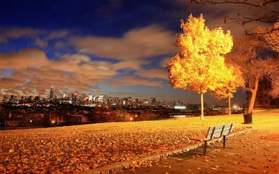 View of New York City from the park wallpaper