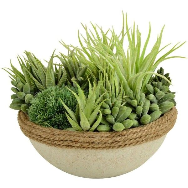 Picnic at Ascot Succulent Green By (73 CAD) ❤ liked on Polyvore featuring home, home decor, floral decor, flowers, plants, artificial flora, green planters, succulent planter, floral home decor and green home decor
