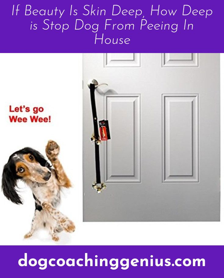 Read More About Stop Dog Chewing Stop Dog Chewing Dog Chews Doggy