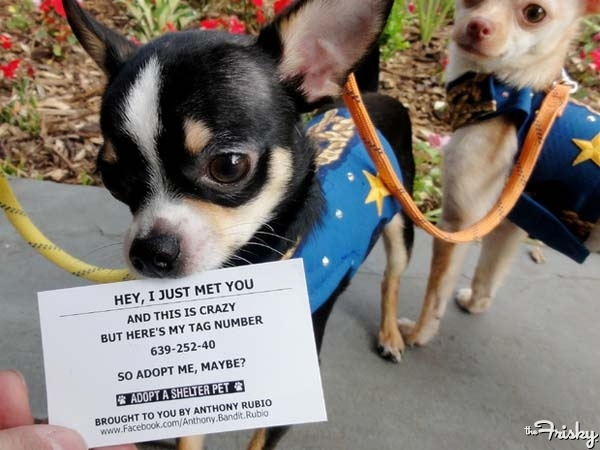 """Shelter Dogs Ask, """"Adopt Me, Maybe?"""""""
