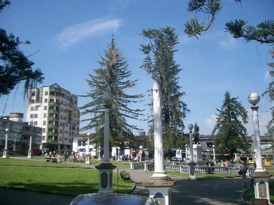 Plaza de Santa Rosa de Cabal, Araucarias milenarias (17858410)