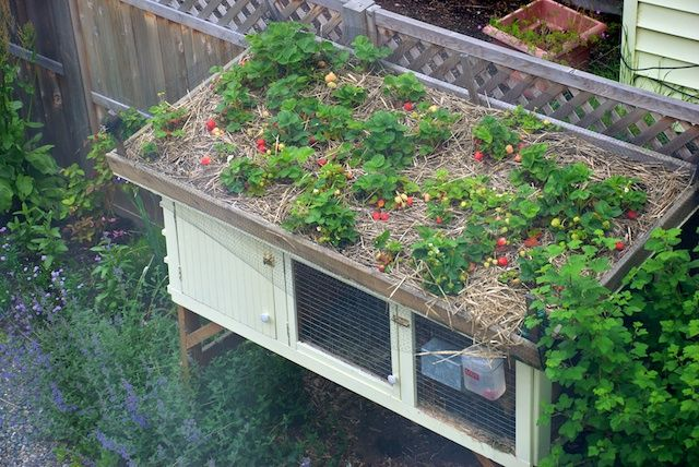 Rabbit hutch the plants on the roof would help keep the for Simple rabbit hutch