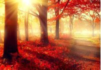 Autumn Art | Wall Art Prints