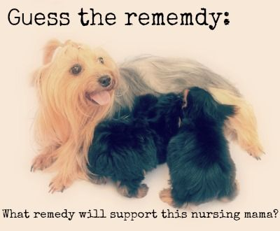What remedy will support this nursing mama?